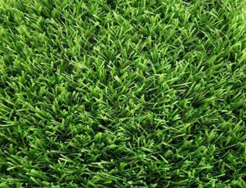 Landscape Grass Spring