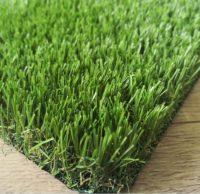 summer syntheti grass
