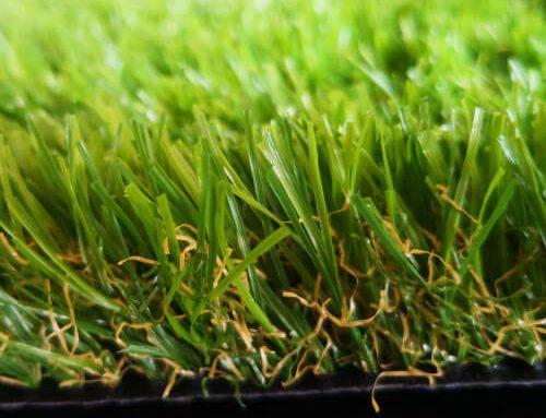 Landscape Grass Summer